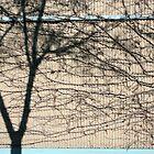 Brunswick wall. by lawrencew