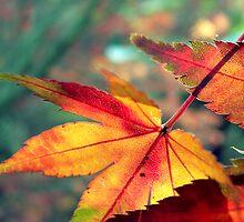 Softly Fall II by James McKenzie