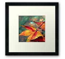 Softly Fall II Framed Print