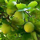 Fresh Fruit    ^ by ctheworld