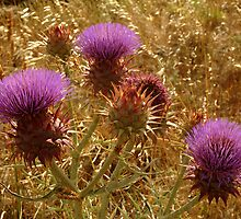 Purple Thistle,Geelong District by Joe Mortelliti