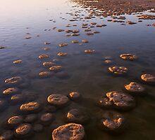 Thrombolites of Lake Clifton by Devar