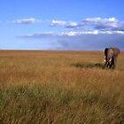 Elephant In Kenya by Afzal Ansary FRPS