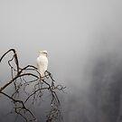 Cockatoo in the Mist by Joel Bramley