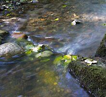 Renfrew Ravine - the rapids 4 by Rod Raglin