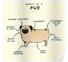 Anatomy of a Pug Poster