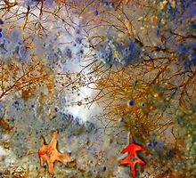 Intricate Puddle by Joanne Byron
