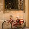 Parisan Bicycle by Craig Goldsmith