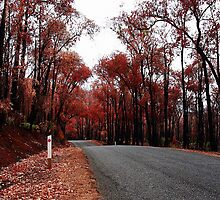 Autumn Drive by EOS20