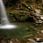 serenity around Grotto Falls by Kevin Price