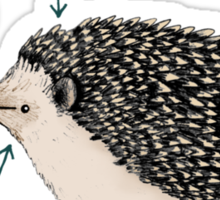 Anatomy of a Hedgehog Sticker