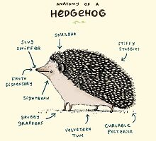 Anatomy of a Hedgehog by Sophie Corrigan