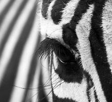 Zebra eye by cannedmoods