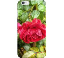 Wet red roses 6 iPhone Case/Skin