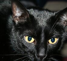 Felix the cat by Rachel Lewter