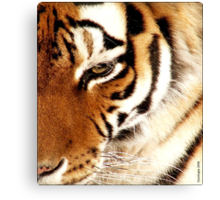 Tiger! Tiger! Burning Bright! Canvas Print