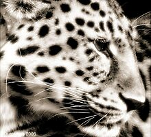 Amur Leopard by Durotriges