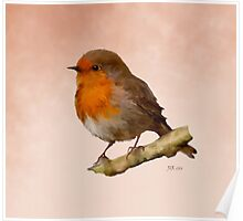 Robin Red Breast Poster