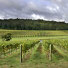 Pemberton Vineyard - Western Australia  by EOS20