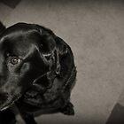 Doggy by Lee Jones