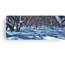Snow Gums and Shadows Canvas Print