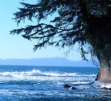 Botanical Beach, Port Renfrew BC by Shannon Ireland