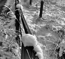 Winter Perspective by Francis Drake