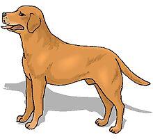 Labrador Retriever by kwg2200