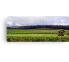 Pemberton Vineyard Panorama  Canvas Print