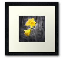 Lonely Dafodil Framed Print