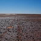 Gibber Plain,Harsh Outback Desert by Joe Mortelliti
