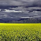 Storm Over The Canola Field  by EOS20