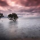 Mangrove dawn by Seng Mah