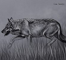 Wolf sketch by Gaia Sorrentino