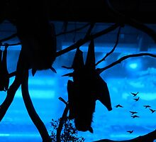 Bats in Budapest by ransleydale