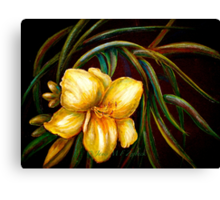 Flowers..DayLily Canvas Print