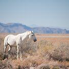 Proud white Stallion  by Nicole  Markmann Nelson