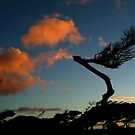 Wind Swept, Torquay,Start of the Great Ocean Road by Joe Mortelliti