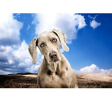 Love Hound Photographic Print