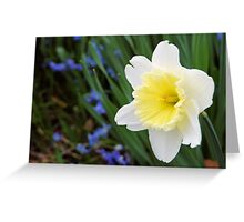 Daffodil with a Hint of Yellow Greeting Card