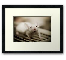 Lab Mouse Framed Print