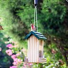 purple house finch by tomcat2170