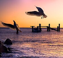 Sunset Flight by Sue Wilson (Kane)
