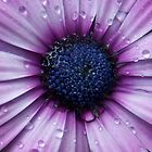 wet flower by tomcat2170