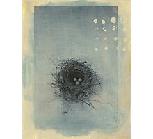 Sparrow's Nest Photographic Print