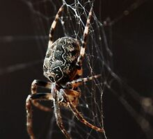 Arachnophobia by Amandalynn Jones