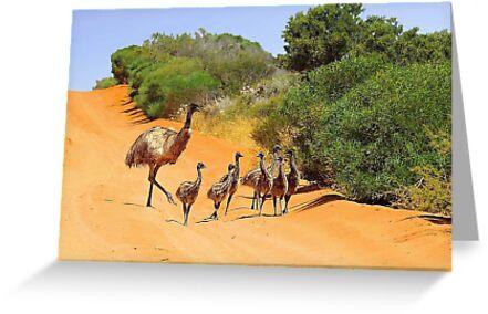 Emu Family  by EOS20