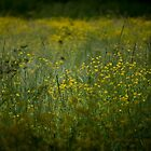 Slumbering Grasses by Mariya Olshevska