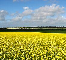 Fields of Joy by Leeo