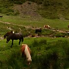 Wild Dartmoor Ponies by Ian Smith
